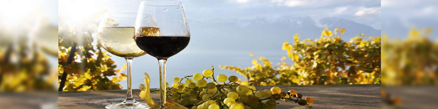 Accessoire pour le vin et le champagne